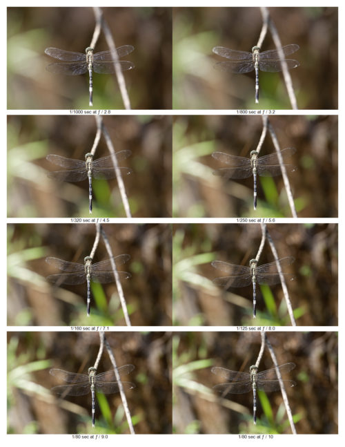 Depth of Field at Different Aperatures