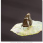 Male Great Eggfly