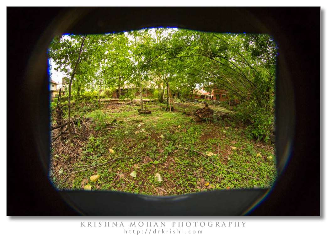 Samyang 8mm fisheye on 5D Mark III