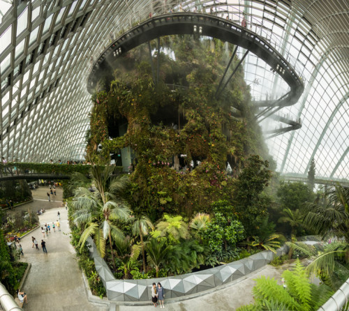 Cloud Forest Panorama