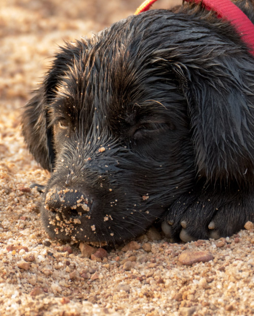 Carbon exhausted after playing in water
