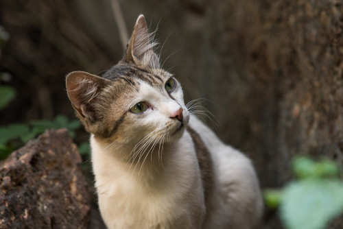Cat with Canon EF 70-200 f/2.8 IS II lens