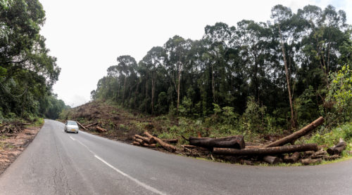 Shiradi, Tree felling Panorama