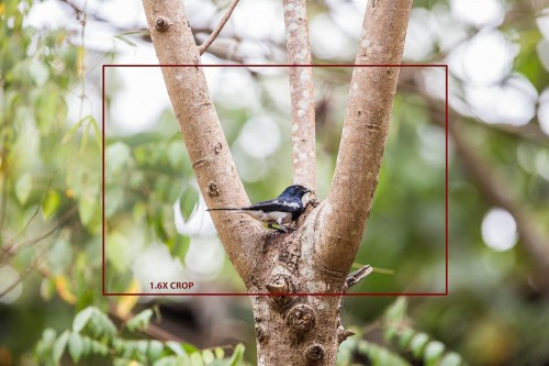 Full Frame Image showing Crop Factor