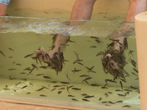 Fish Spa in Wild Wadi Water Park