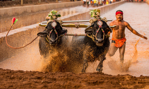 Kambala Time Table 2018-19