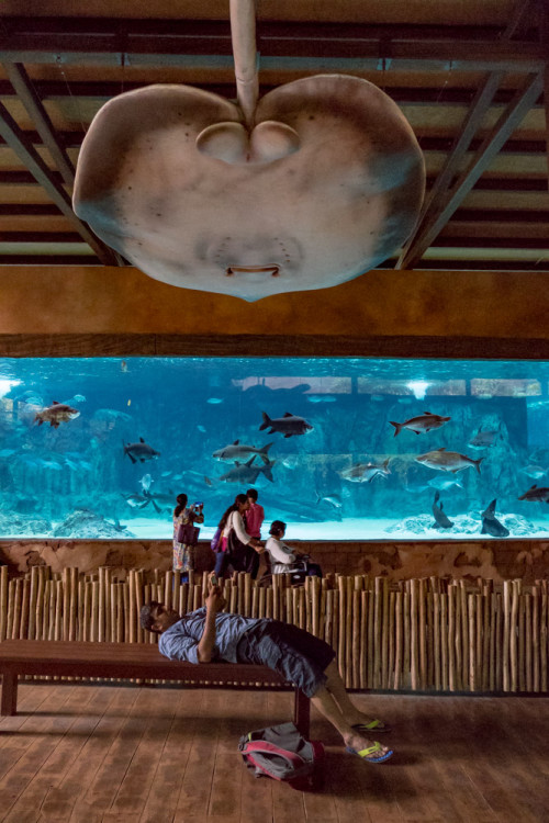 Trying 360 degree view of River Safari exhibits