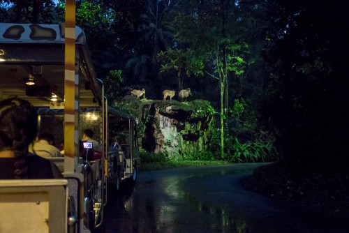 Tram Ride at Night Safari - Himalayan tahrs