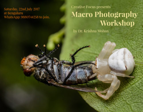 Macro Photography Workshop