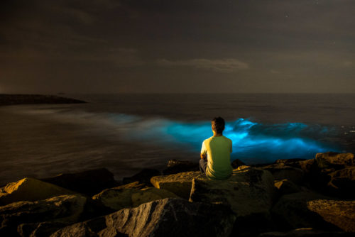 Bioluminescence - Living Lights