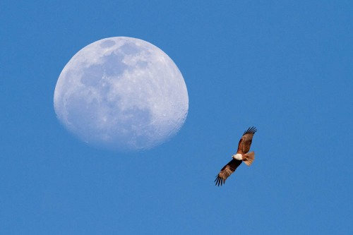 Moon and Brahminy Kite Composite