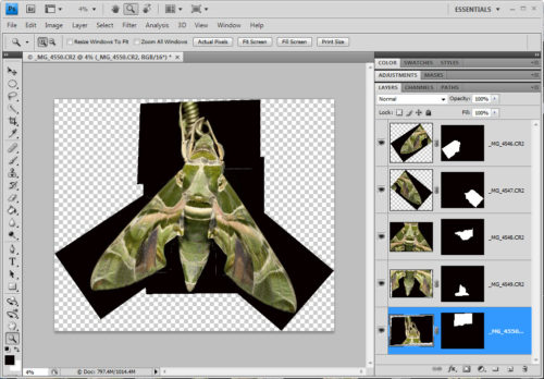 Macro Stitching a Moth - Panorama on Photoshop