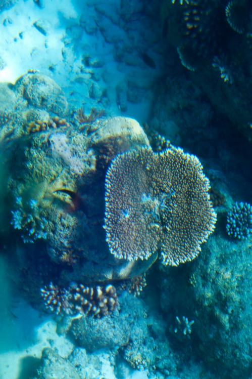 Corals from Glass Bottom Boat